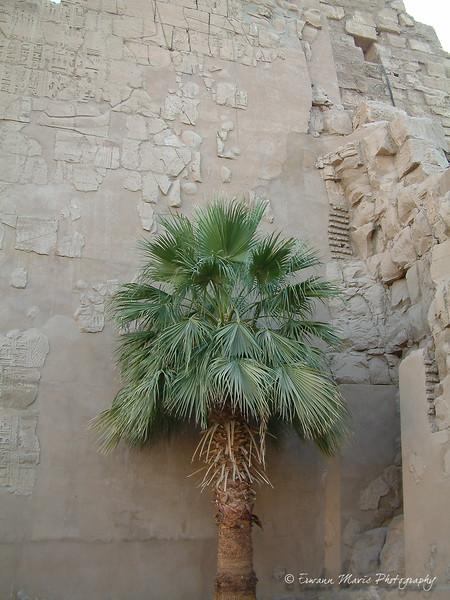 Egypte (34)