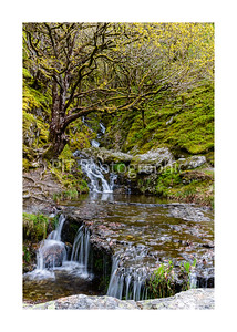 Tree over waterfall at Garreg Ddu Reservoir