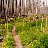 55  G Burnt Forest Bear Grass Trail V