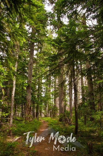 7  G Trail Through Trees V