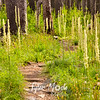 63  G Burnt Forest Bear Grass Trail
