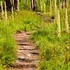 61  G Burnt Forest Bear Grass Trail V