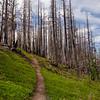 112  G Burnt Forest Trail V