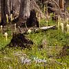 110  G Burnt Forest Bear Grass