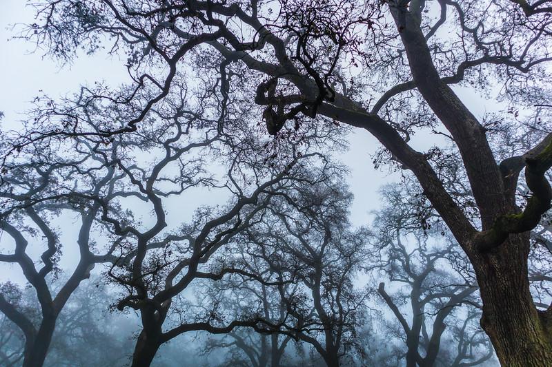 Skelton Tree