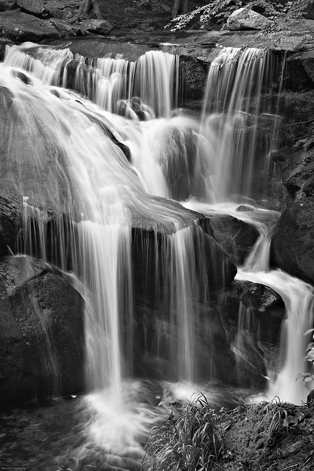 Enders State Forest In B&W