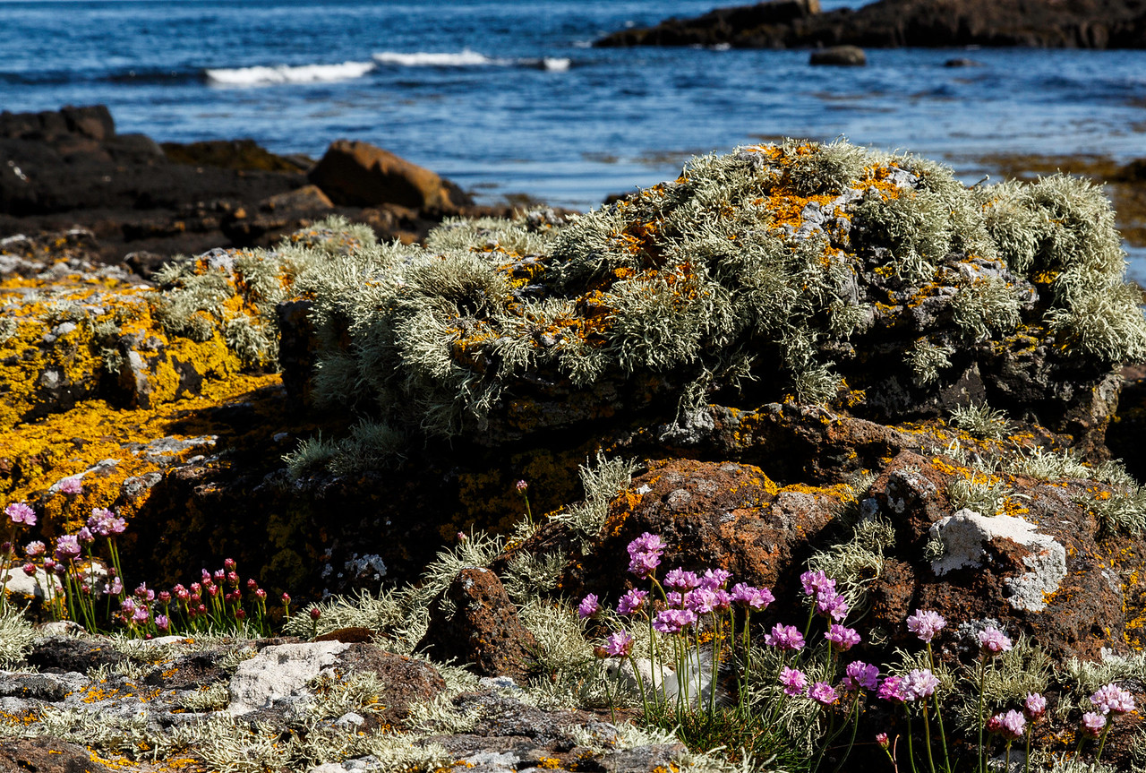 Rocky Shore, Staffin Bay, Isle of Skye