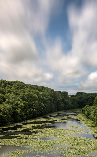 Bosherston Lily pad ponds 25/6/17
