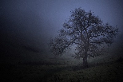 Sole tree in the fog, Bath