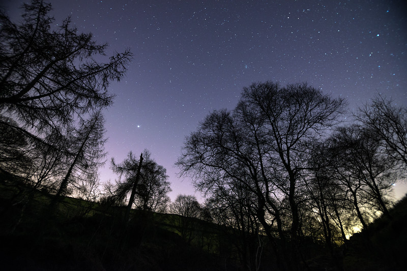 Trees and stars.