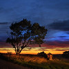 Tree and rural farming equipment with beautiful sunset.