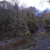 Undercut riverbank