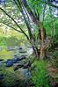 Emerald Eno Riverbank 18 tc wm