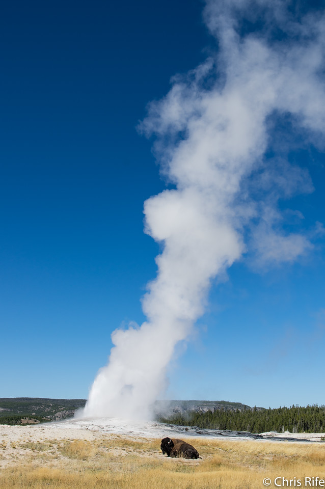 Bison and Old Faithful