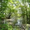 Moraine Farm<br /> swamp backing into Wenham Lake