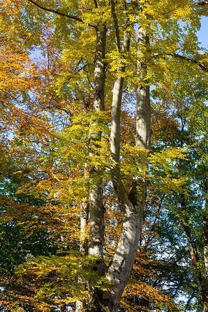 Forest near Neuschwanstein Castle, Germany