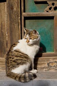 (CH-10156)  Pingyao Kitty.