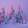 The Glowing Pinks Of Sunset On The Horizon - Iso-Syote, Finland