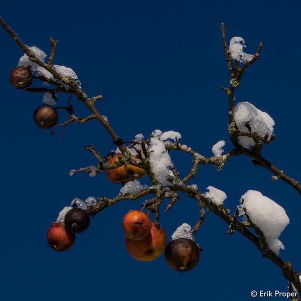 © Erik Proper - EP20141228-0051