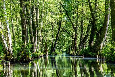 Spreeforest