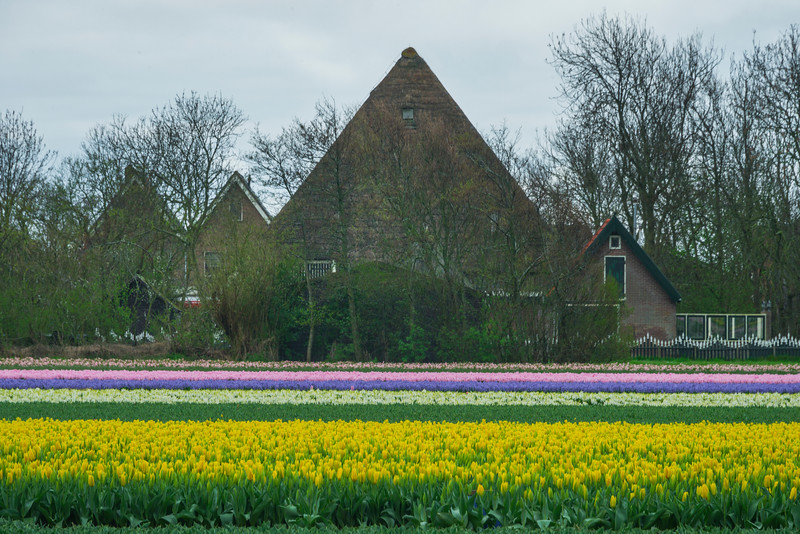 Unique Houses And Tulips Of Holland