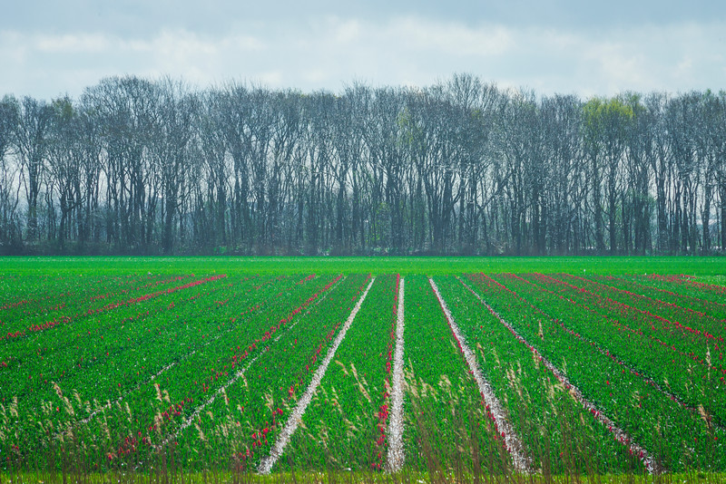 Fields With Color Patterns In North Holland