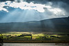 Farm scene near Akureyri