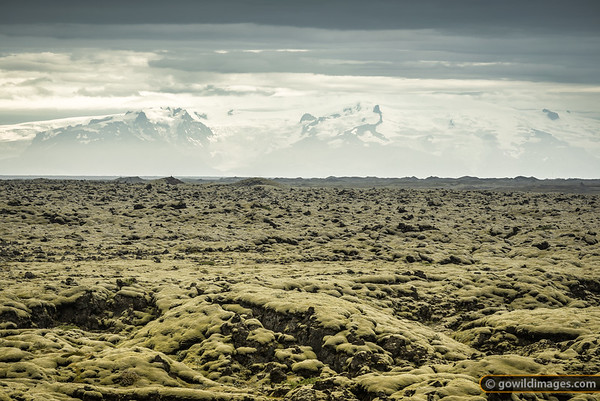 View towards Vatnajökull over old, mossy, lava field. Hvannadalshnjúkur is the highest peak at 2109m.