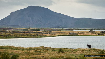 Lake Mývatn and Vindbelgarfjall mountain