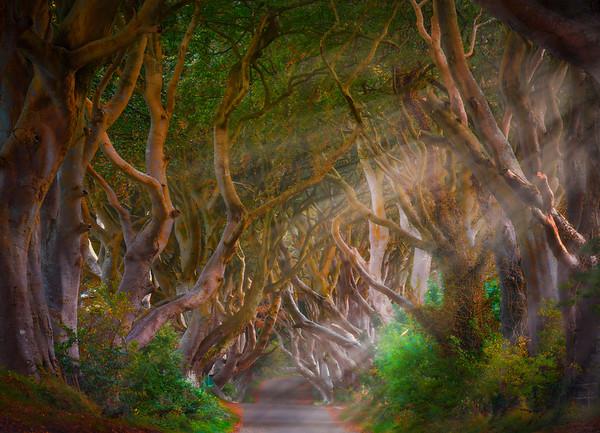 The Famous Dark Hedges - County Antrim, Northern Ireland, Republic Of Ireland