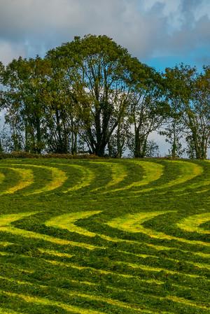 Wavy Lines Of Farming- The Dingle Peninsula, County Kerry, Ireland