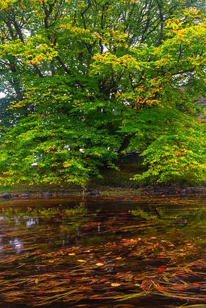 River Autumn - Connemara Loop, County Galway, Ireland
