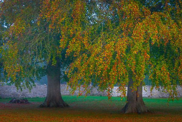 Autumn Arrival On The Trees - Limerick, Munster, Ireland