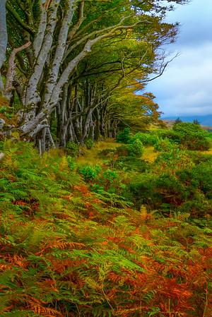 Meadow Of Trees And Color - Connemara Loop, County Galway, Ireland