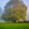 A Mix Of Mist And Autumn - Limerick, Munster, Ireland