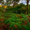 Autumn Forest - Sligo, Sligo County,  Ireland