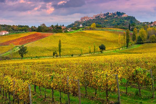 Fields Of Yellow - Val d'Orcia Region, Tuscany, Italy