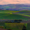The Green Pastoral Fields Of Tuscany - Val d'Orcia Region, Tuscany, Italy