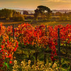 Dreamy Tuscan Moments In Autumn - Val d'Orcia Region, Tuscany, Italy