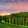 The Iconic Tuscan Cypress Trees Of Italy - Val d'Orcia Region, Tuscany, Italy