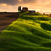 Standing Tall and Proud - Val d'Orcia Region, Tuscany, Italy