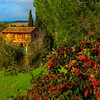 The Autumn Look Of Tuscany - Val d'Orcia Region, Tuscany, Italy