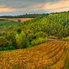 The Ups And Down Of Italian Life - Val d'Orcia Region, Tuscany, Italy