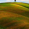 Alone At The Top - Val d'Orcia Region, Tuscany, Italy