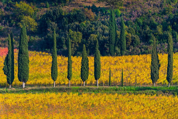 Rows Of Yellow And Green - Val d'Orcia Region, Tuscany, Italy