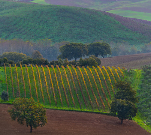 The Ups And Downs Of Tuscany Fields - Val d'Orcia Region, Tuscany, Italy