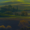 The Different Shades Of Green - Val d'Orcia Region, Tuscany, Italy