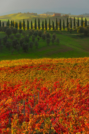 The Power Of Autumn - Val d'Orcia Region, Tuscany, Italy
