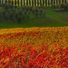 The Power Of Autumn - Val d'Orcia Region, Tuscany, Italy