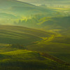 The Misting Green Of Tuscany - Val d'Orcia Region, Tuscany, Italy